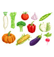 fresh vegetable watercolor drawing set vector image