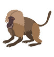 gelada monkey icon cartoon style vector image