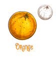 orange fruit sketch isolated icon vector image vector image