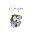 tasty veggies grapes vector image vector image