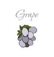 tasty veggies grapes vector image