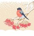 Cute Bullfinch on the branch of rowan vector image