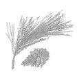 pine branch or twig vector image
