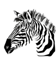 Portrait of zebra on the white background vector image vector image