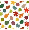 seamless pattern autumn leaves maple elm vector image