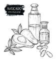sketch set of avocado products oil cream vector image vector image