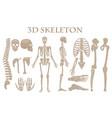 human bones 3d realistic skeleton vector image