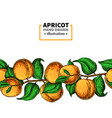 apricot branch seamless border hand drawn vector image vector image
