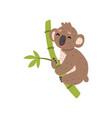 cute koala bear climbing tree branch australian vector image