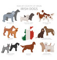 dogs country origin irish dog breeds vector image