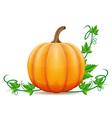 pumpkin 02 vector image vector image