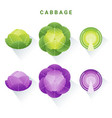 set of fresh green and red cabbages vector image vector image