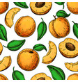 apricot seamless pattern drawing hand vector image vector image