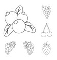 berry and fruit symbol vector image