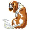 chestnut cavalier king charles spaniel vector image vector image