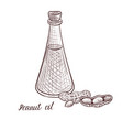 drawing peanut oil vector image vector image