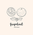 grapefruit fruit drawing sketch grapefruits on vector image vector image