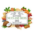 nuts and seeds vector image vector image