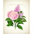 Syringa and Hydrangea Botanical vector image
