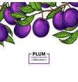 plum branch border hand drawn isolated fruit vector image vector image