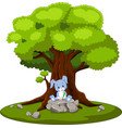 rabbit reading book and sitting on the stone vector image vector image