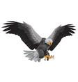 Bald eagle flying winged swoop polygon on white ba