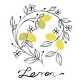 branch of lemon tree with flowers and leaves vector image