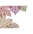 card with autumn foliage vector image