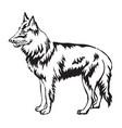 decorative standing portrait of belgian shepherd vector image vector image