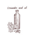 drawing coriander seed oil vector image