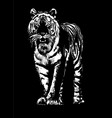 tiger drawing sketch vector image