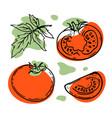 tomato fresh vegetables in sketch vector image