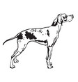 decorative standing portrait of pointer vector image vector image