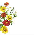 drawing wild flowers vector image