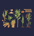 hand drawn collection sugar cane sprigs vector image