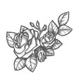 sketch rose bouquet with buds and flower vector image