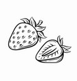strawberry black vector image vector image