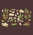 bundle elegant botanical drawings pistachio vector image vector image