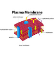 Diagram with plasma membrane vector image vector image