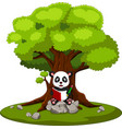 panda reading book and sitting on the stone vector image vector image