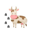 funny cow and her footprints tracks big farm vector image