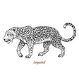 african wild leopard profile asian cat animal vector image vector image