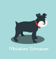 an depicting miniature schnauzer dog cartoon vector image