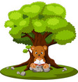 bear reading book and sitting on the stone vector image vector image