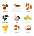 collection of different nuts flat style different vector image