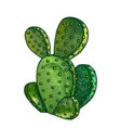 color opuntia azurea prickly pear cactus ink vector image vector image