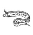giant oarfish sketch engraving vector image vector image