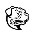 head leavitt bulldog or old english bulldog vector image vector image