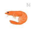 orange shrimp on a white background seafood vector image