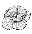 poppy flowers hand drawn can be used in design vector image vector image
